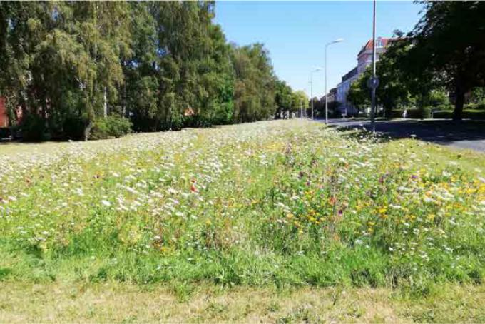 Foto: Grün- und Freifläche an der Rostocker Straße