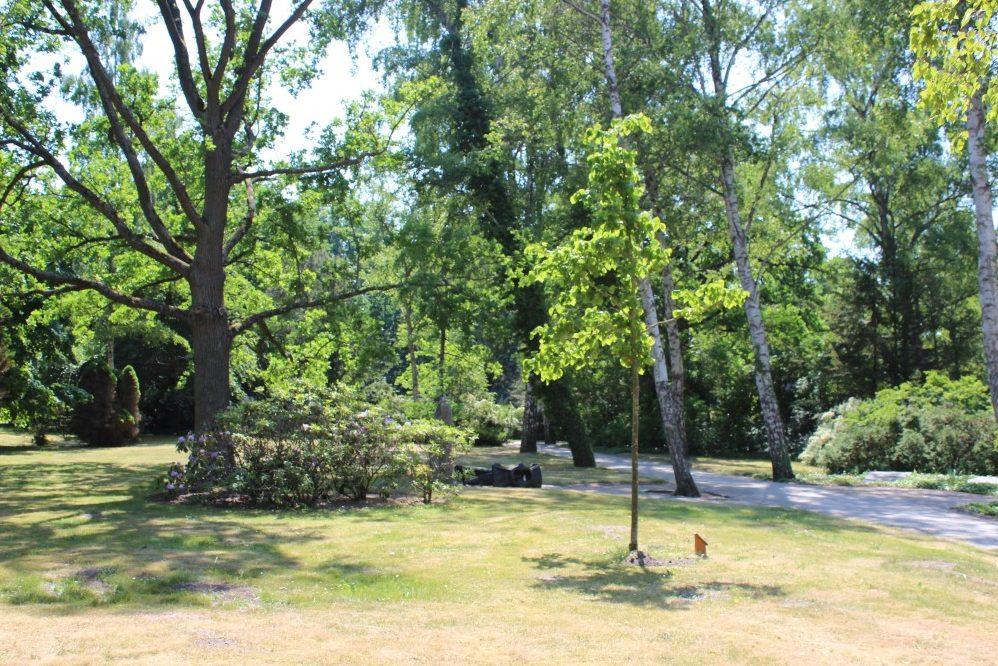 Foto: Parkfläche mit Bäumen